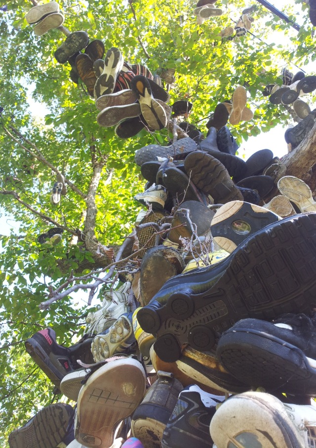 Brechin Shoe Tree